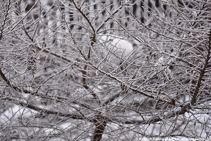 Mróz i śnieg w ogrodzie