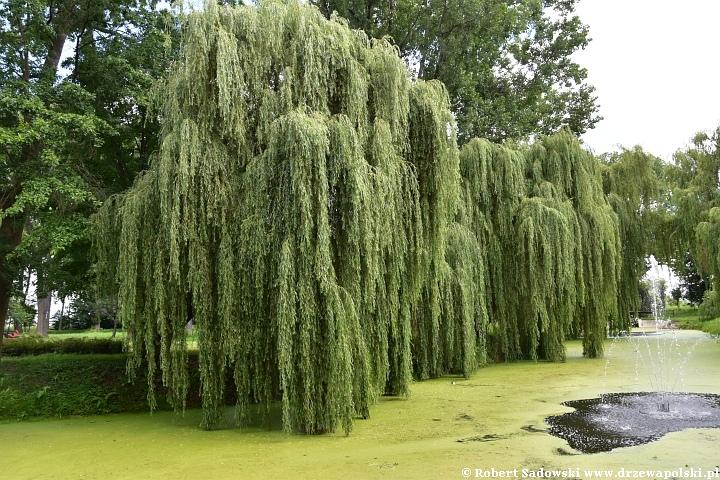 Tereny zielone mają długotrwały, pozytywny wpływ na nasze samopoczucie