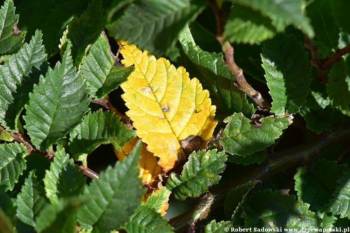 Pierwsze oznaki jesieni w ogrodzie