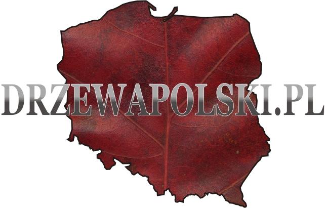 logotyp drzewapolski.pl