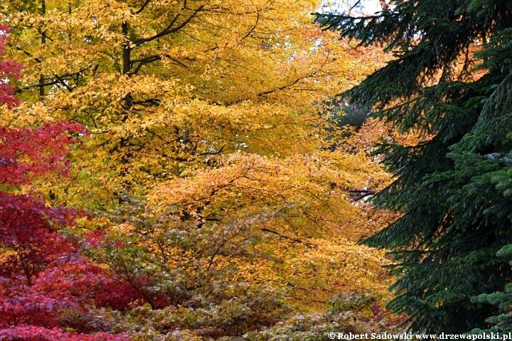 Jesień w arboretum