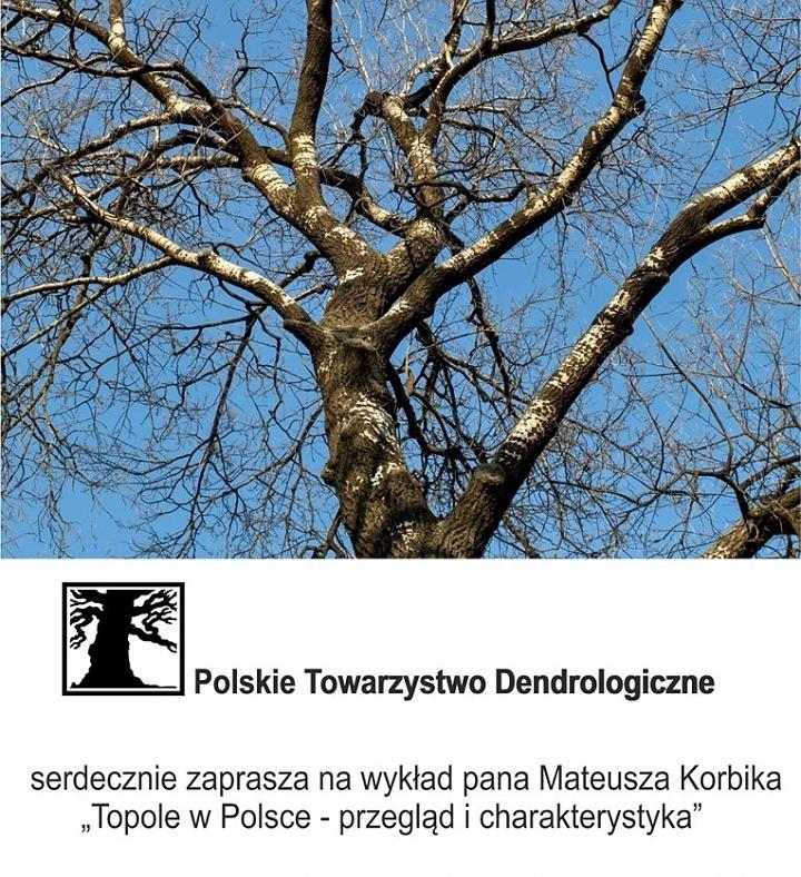 Topole w Polsce - przegląd i charakterystyka
